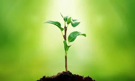 Yogi Adityanath government in UP plans to plant 25 crore saplings