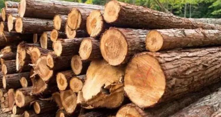 wood-laden trucks