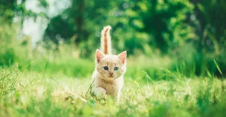human-cat link