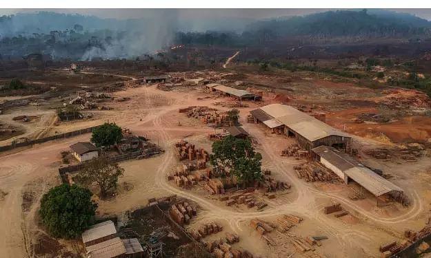 Amazon rainforest registers record deforestation