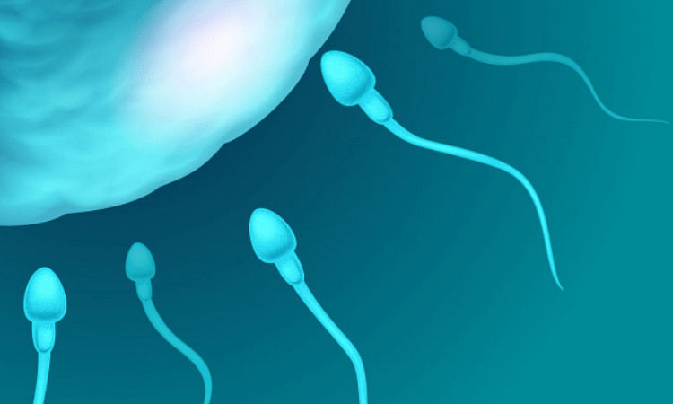 Human sperm swims in entirely different way than earlier thought - Sentinelassam - The Sentinel Assam