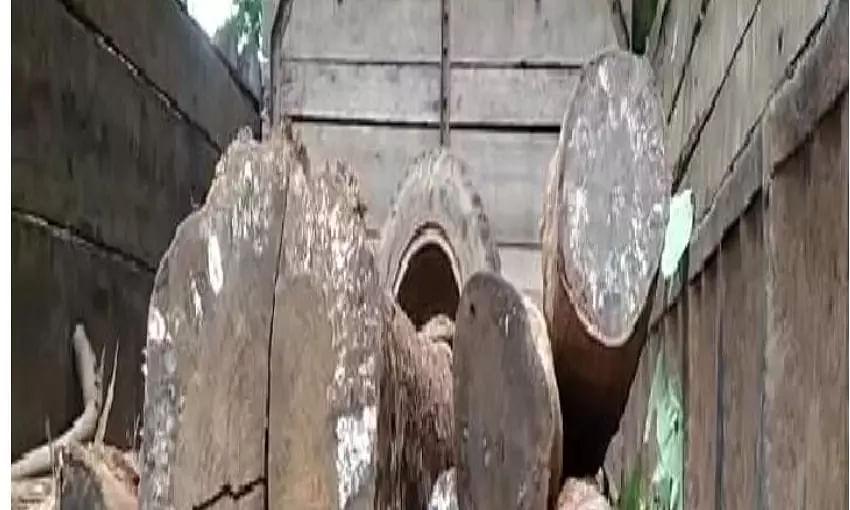 illegal logs