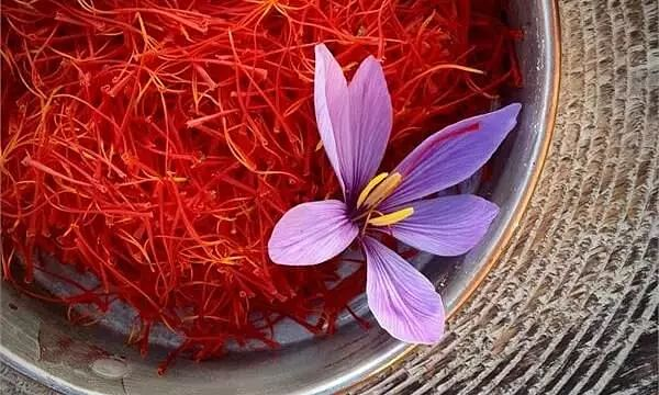Now saffron cultivation in Northeast soon