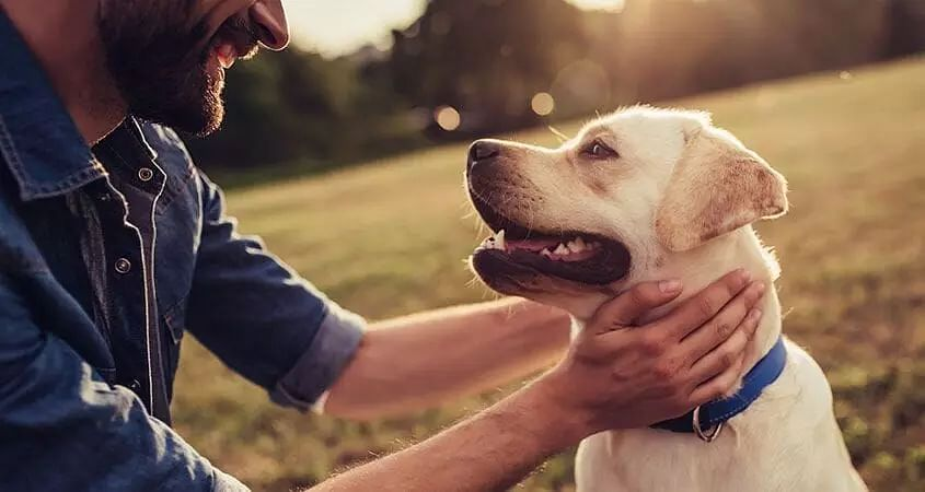 How can you keep your dog happy?