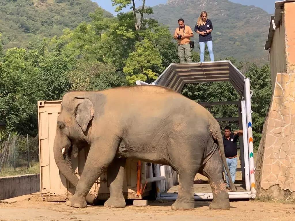 'World's loneliest elephant' Kaavan is free today