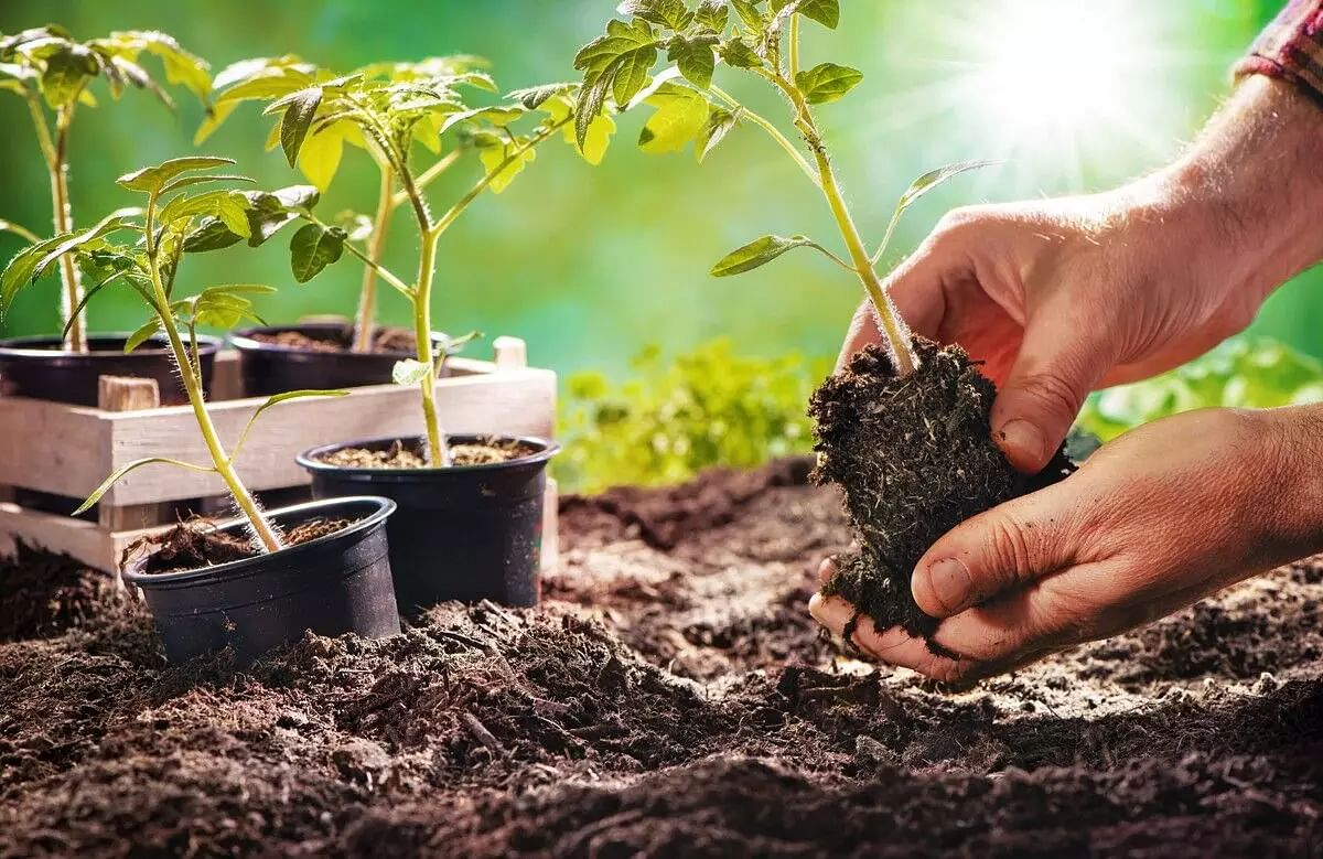 Vegetable gardening: Best vegetables to grow at home