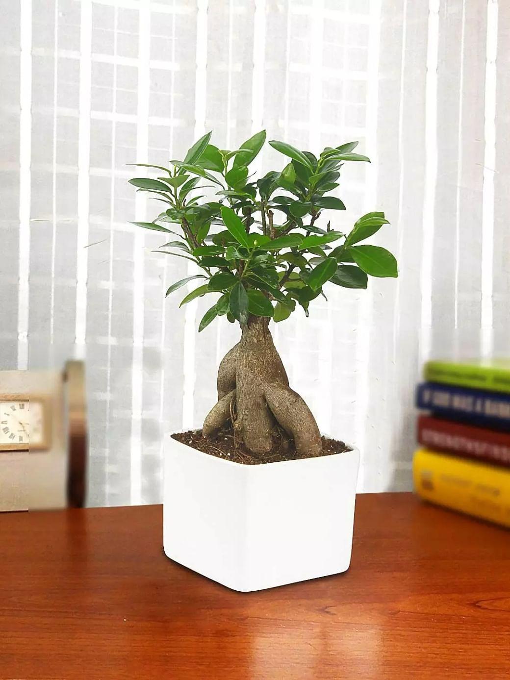 Indoor Plants Best Indoor Plants For A Beautiful Home Sentinelassam