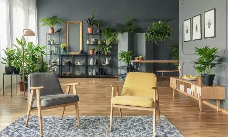 Indoor plants: Best indoor plants for a beautiful home.