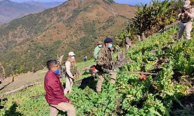 1315 acres of poppy plants destroyed by Manipur police