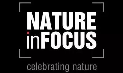 Nature inFocus Photography Awards 2020, wildlife conservation insights from the winners