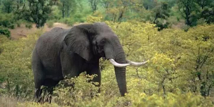 Two elephants electrocuted in Sivasagar, 6 arrested