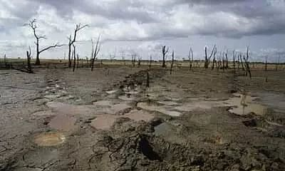 Dying wetlands