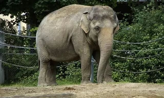 Barbaric! Elephant Killed in Tamil Nadu After Resort Workers Threw Burning Tyre At It