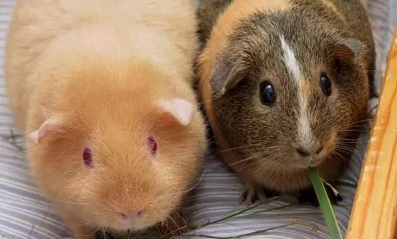 BIS replaces guinea pig test for pathogen detection