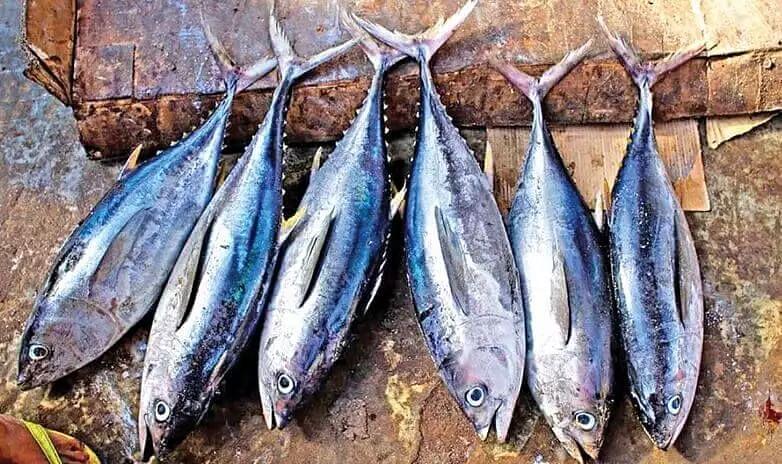 Tamil Nadu fishermen baffled at Kerala police for destroying tuna fish