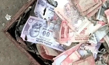 Termites Eat Rs 5 Lakh Worth of Andhra Mans Savings, Dream to Build Home Shattered
