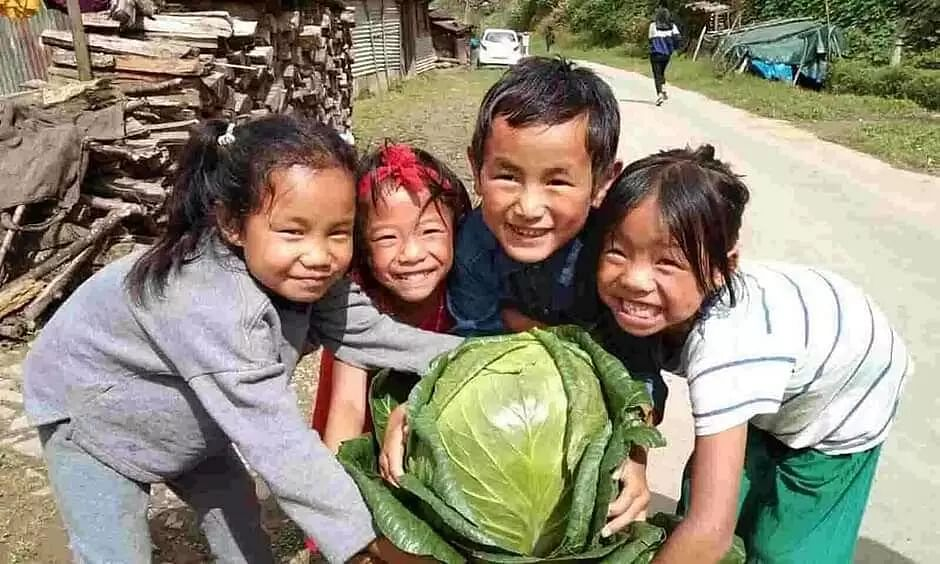 7.6 kg organic cabbage grown in Poumai Naga village, picture goes viral