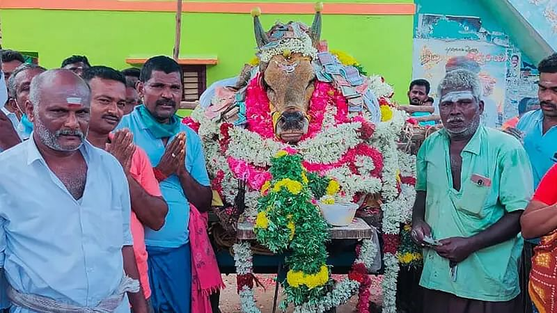 Defying lockdown thousands take out funeral procession of a temple bull in Tamil Nadu