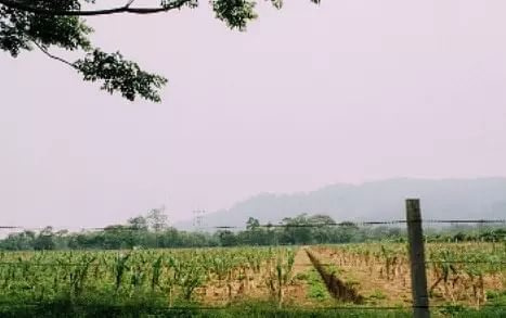 Tea Estates of Assam: Everything to Know About Assam Tea Gardens
