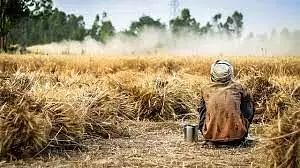 Indian agriculture Maladies & remedies