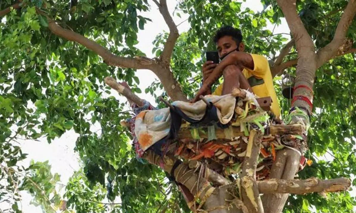 18-year-old Telangana COVID Positive Boy Isolates Himself on a Tree