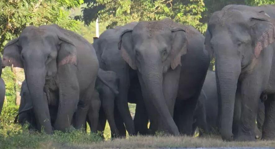 man-elephant