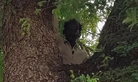 Man Climbs Atop Tree With His Wifes Aadhar Card to Avoid Covid Vaccination