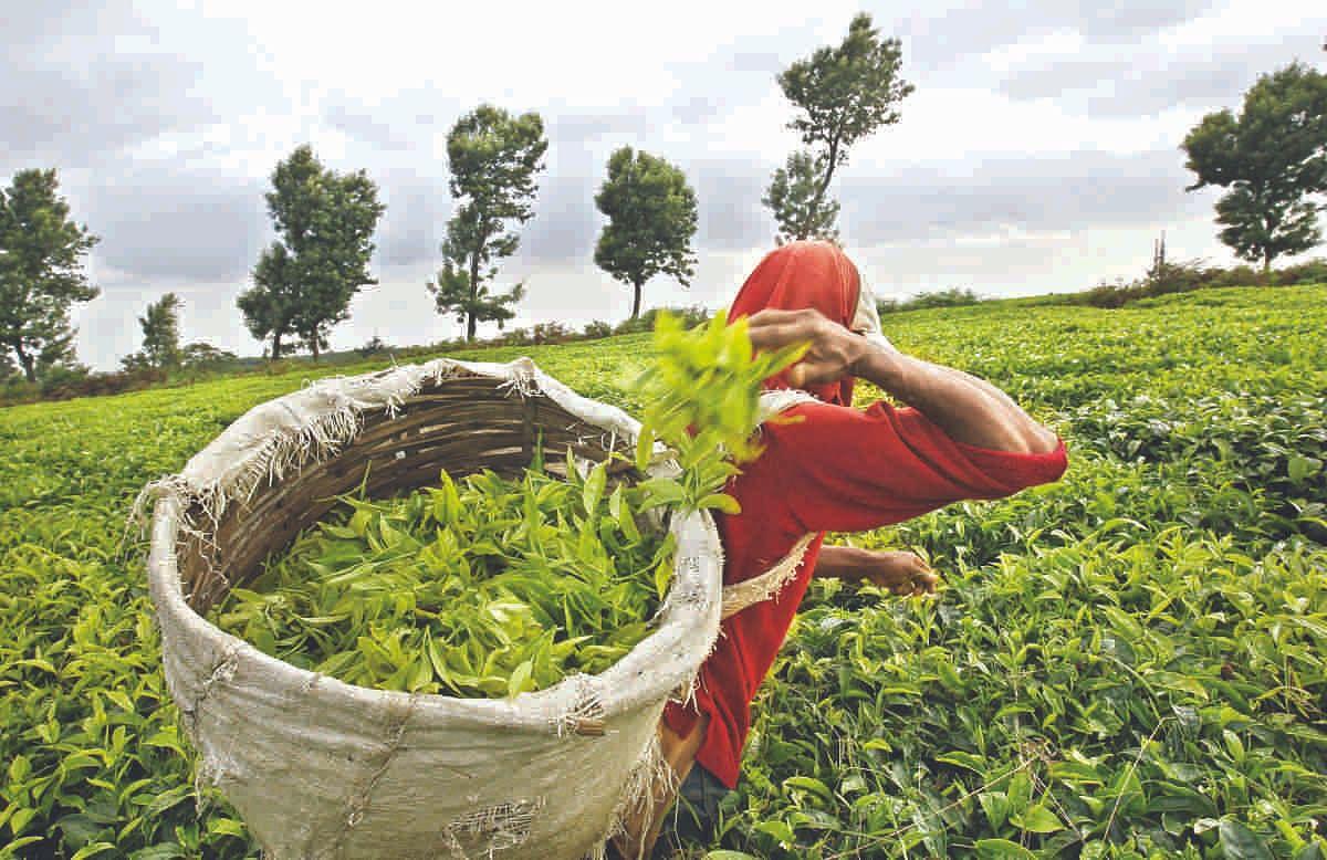 Power surcharge exemption for  Tea garden workers, BPL families