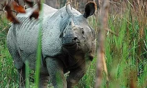 22 One-Horned Rhinos Killed by Poachers in Last 5 Years