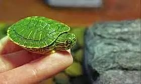 Maharashtra Forest Dept Airlifts Rare Turtle Species To Be Released In Assam, Their Natural Habitat