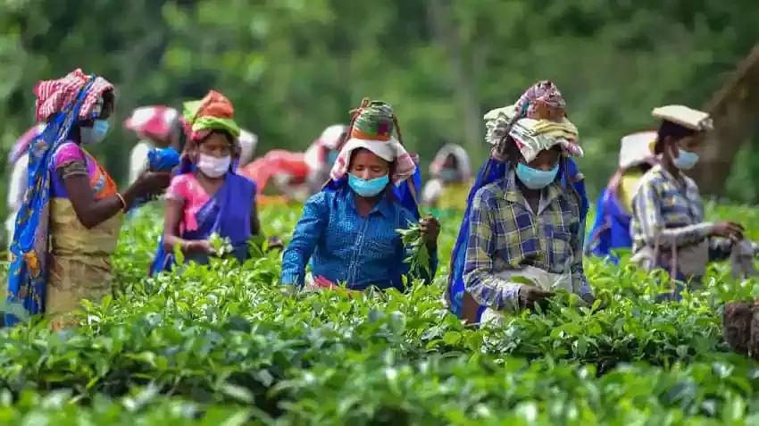 Demand For Bonus To Tea Garden Workers In Assam