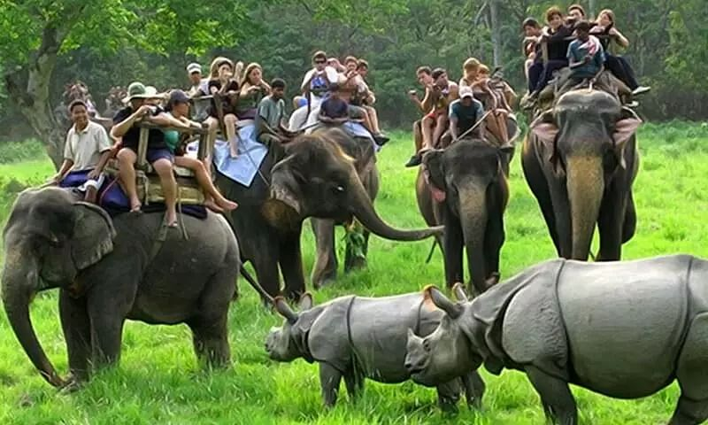 Kaziranga National Park Opens from October 1 to Tourists and Visitors