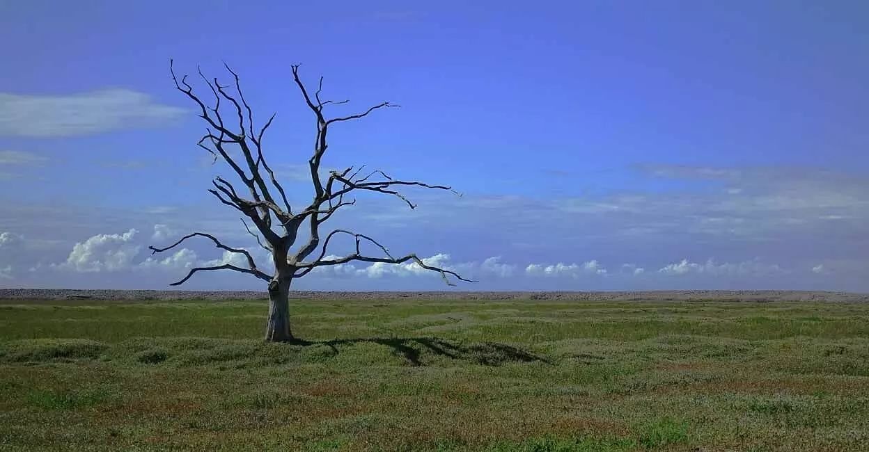 Climate change in Tibetan Plateau impacts livelihoods